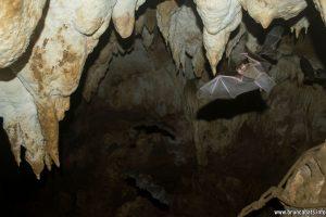 Пещерата на Пуебло Нуево