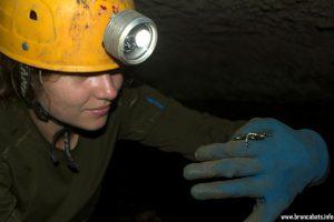 Отровна жаба, попаднала в пещера
